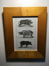 Framed Antique 1821 Copperplate Engraving, Pigs, Wild Boar, S.Davenport sc. !