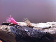 Crazy Charlie Bonefish Fly 6 Flies white tan pink size #4 #6 34007 redfish,