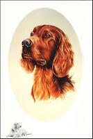 IRISH RED SETTER GUNDOG GUN DOG FINE ART PRINT - Oval Head Study