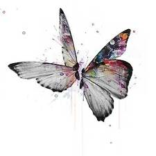 VeeBee Butterflies in watercolour . signed limited edition print