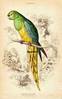 Gravur: Nanodes venustus from 1836 Motiv Bild Papagei Vögel Parrot Ornithology