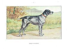 1930 Art Castellan France Dog Watercolor Print Auvergne D'Auvergne Pointer