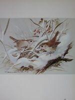 Basilico Ede Uccello Stampa ~ Scricciolo