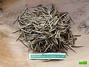 frische Moso Bambus Samen, Phyllostachys pubescens, Neu Januar 2021