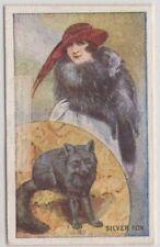 1920s Silver Fox Pelt Trapping Fashion Hunting 90+ Y/O Trade Ad Card