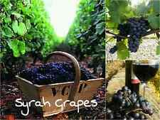 10 SYRAH GRAPE SEEDS Edible Fruit Garden Grapevine Vine Tasty Popular Wine