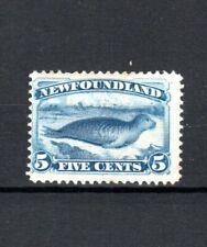 Canada - Newfoundland 1894 5c bright blue Common Seal MLH