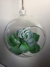 Globe Ball Glass Hanging Pot Mini Plant Terrarium