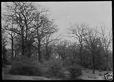 Glass Magic Lantern Slide HAWK WOOD EPPING FOREST NO1 C1890 PHOTO ESSEX TREES