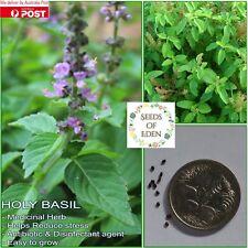 "50 BASIL ""HOLY GREEN"" /TULSI SEEDS(Ocimum tenuiflorum); Medicinal herb"
