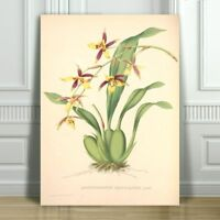 """JEAN LINDEN - Beautiful Yellow & Red Orchid #9 - CANVAS ART PRINT POSTER -18x12"""""""