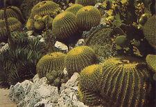 AK: Principauté de Monaco - Le Jardin Exotique - Echinocactus Grusonii (Cactée M