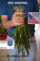 25 Jungle val plants live aquarium plants aquascaping planted tank easy