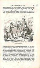 Boussole d'Inclinaison Dip circle Earth's magnetic  GRAVURE ANTIQUE PRINT 1883
