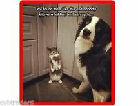 Funny Border Collie Dog  & Cat Refrigerator / Tool Box Magnet Gift Card Insert