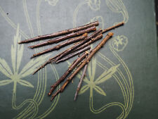 10 English Blackthorn Thorns for Protection- Pagan, Wicca, Witchcraft, Spellwork