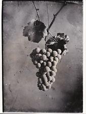 Léon Foucault Grappe de raisin 1844 Tirage argentique postérieur circa 1970