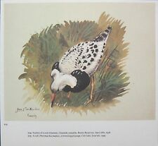 BEAUTIFUL VINTAGE BIRD PRINT ~ RUFF IN BREEDING PLUMMAGE