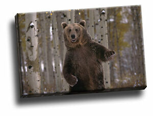 What Up Yo Brown Bear Giclee Canvas Wild Life Picture Art