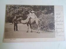 Vintage Raphael Tuck Postcard ZOO SERIES CAMEL No 523 Franked+Stamped 1905  §A23