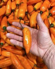 25 SEEDS Aji Amarillo Peppers Garden Fresh Vegetables Healthy Planting