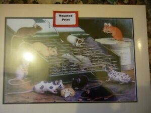 Fancy pet mice group mounted print  of painting by Wippell for framing