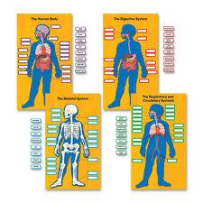 """Carson-Dellosa Bulletin Board Set Human Body 13-3/4""""x24"""" 84/Pk Multi 110178"""