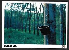 [KKK] MALAYSIA POSTCARD - RUBBER TREE