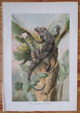Beautiful Print The Black Iguana * - 1896