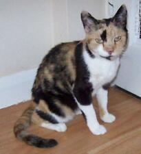 Sponsor a Cats Protection Cat for One Year - Susie