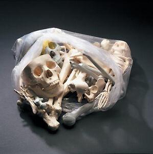 12lb Bag of Bones Bucky Skeleton Human Halloween Prop