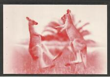 AUSTRALIA 2004 BOXING KANGAROO POSTCARD - Lake Macquarie c1950