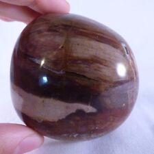 'A' Grade Large Fossilized Podocarpus Wood Polished Freeform - 69mm, 305g