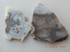 Lysite Agate Rough for Cabbing