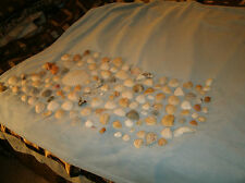 Mixed lot of 130 Natural Sea Shells (great for crafting or displays)