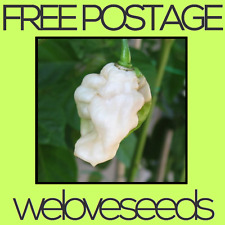 LOCAL AUSSIE STOCK - White Bhut Jolokia / Ghost Pepper Chili / Chilli Seeds ~70x