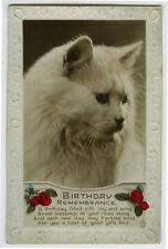 New listing 1920s Kittens Handsome White Cat British photo postcard