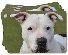 American Staffordshire Bull Terrier Dog Picture Placemats in Gift Box, AD-SBT5P