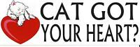 BUMPER STICKER - CAT GOT YOUR HEART?