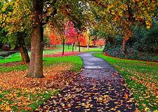 Splendido parco Autunno Paesaggio Canvas #94 qualità A1 NATURA Foto Wall Art