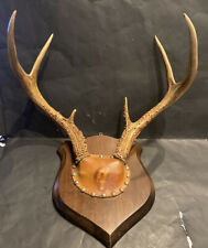 VINTAGE TAXIDERMY PROFESSIONALLY MOUNTED DEER ANTLERS W/WOOD/LEATHER PLAQUE NR