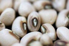 100 BLACKEYE PEA Black Eye Eyed Southern Cow Pea Seeds