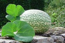 🎃5 GRAINES DE COURGE DE SIAM(Cucurbita ficifolia) Lacayoye SEEDS SAMEN SEMILLAS