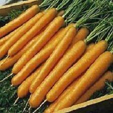 20,000 Tender Sweet Carrot Seeds Bulk Seeds