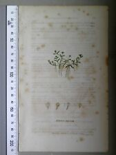 English Botany, Smith, Sowerby, handcoloured copperplate, 578, 3.Edition,1850.