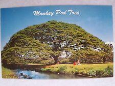 Hawaiin, Monkey Pod Tree! Hawaii, Hi. Unused Pristine Unused Color Postcard Pc