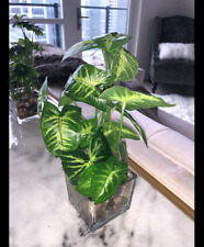 Set of 3 Artificial Plants, Faux Tabletop Greenery w/Clear Glass Pots
