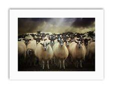 Rebaño de ovejas animales de granja Foto Poster Imagen de Lona Impresiones Artísticas