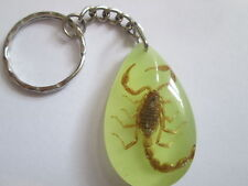 Real Scorpion Keyring-Set in glow in the dark resin -Great Grusome Gift - K131