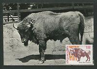 BULGARIA MK 1973 FAUNA BISON WISENT MAXIMUMKARTE CARTE MAXIMUM CARD MC CM d5875